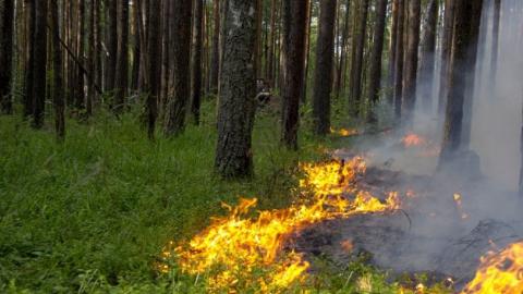Лесной пожар тушили у села Генеральское в Энгельсе
