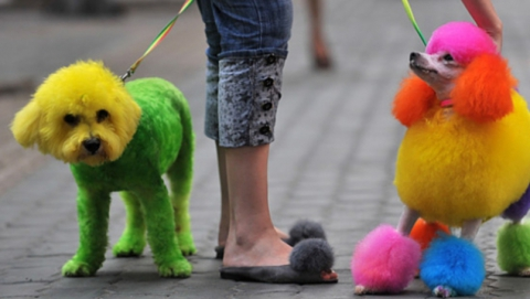 Саратовцев приглашают на дефиле редких пород собак