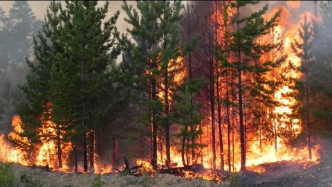 Вчера в области горели еще два леса