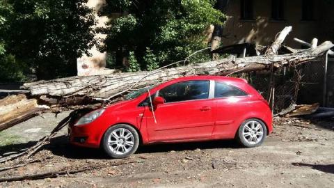 Спасатели освободили машину автоледи от упавшего дерева