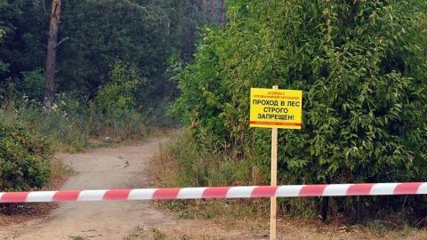 В Саратовской области продлен запрет на посещение лесов