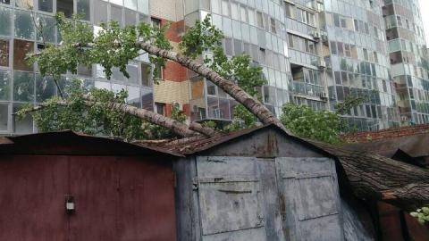 На Советской упал тополь