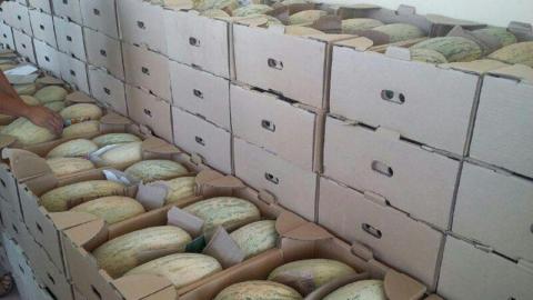 В Саратов не пустили 20 тонн дынь из Казахстана
