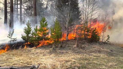 В Саратовской области горел лес и скирда сена