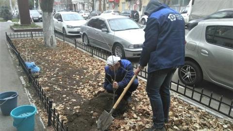 Сотрудники КВС высадили саженцы деревьев