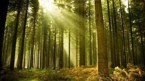 Саратовцам разрешили жечь костры в лесах