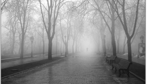 Сегодня по области туман и морось