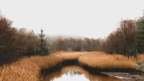 В болоте нашли тело девушки