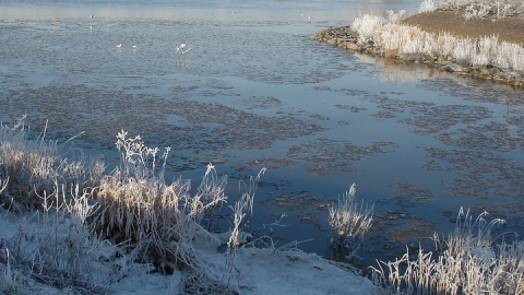 Провалившийся в полынью мужчина насмерть замерз у самого берега