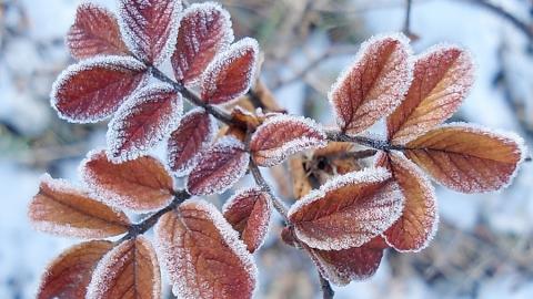 Синоптики обещают небольшой снег