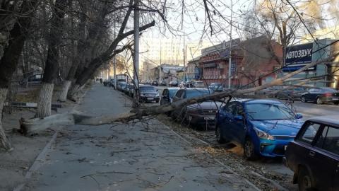 Поваленное ветром дерево накрыло припаркованные машины