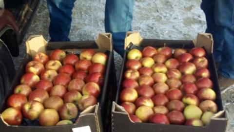 В область не пропустили виноград, бананы, груши и яблоки