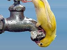 126 жилых домов до утра останутся без воды