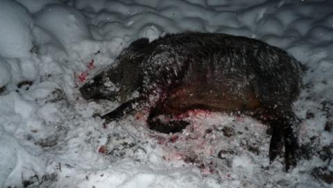 Трех браконьеров задержали после ночной погони со стрельбой