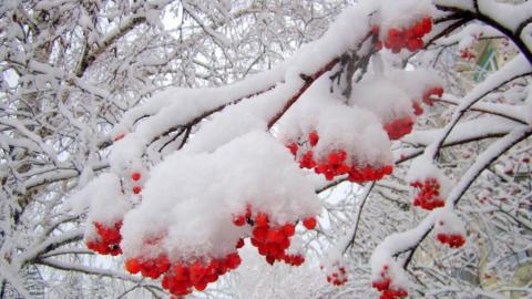 Синоптики обещают снег и гололед