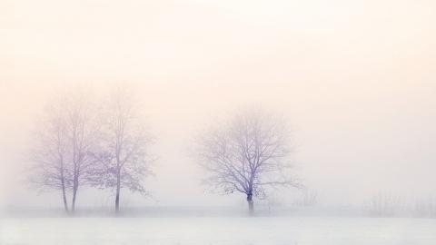 Неделя будет снежной и теплой