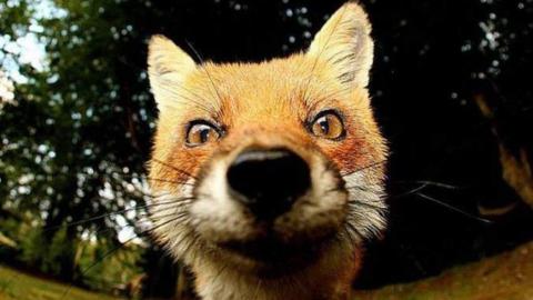 Комитет охотничьего хозяйства не смог отобрать охотничьи угодья у фирмы-банкрота