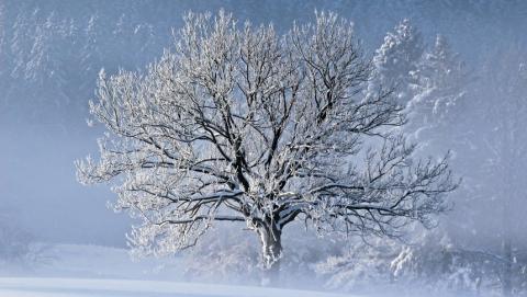 Сегодня в области ожидается небольшой снег и туман