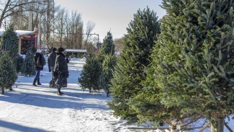 Полицейские начали массовые облавы на торговцев елками