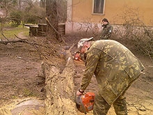 С Первомайской уберут деревья