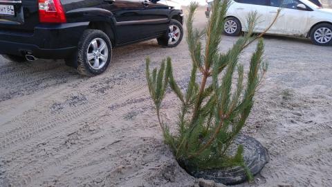 Посреди дороги поставили новогоднюю елку