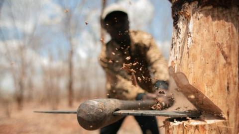 Чиновники незаконно сдали в аренду гектар леса