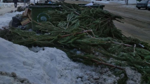 Торговцы соснами изрубили и бросили непроданные деревья в центре Саратова