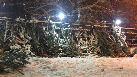 Продавцы елок бросили десятки деревьев на месте торговли