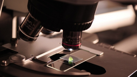 В мясе и молоке нашли бактерии, антибиотики и растительные жиры
