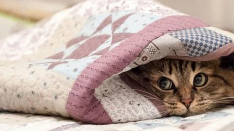 В Саратове прогнозируют аномальные холода