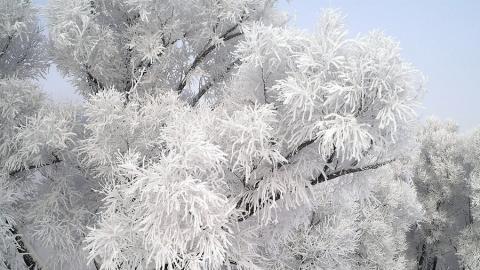 Сегодня похолодает, синоптики обещают туманы и метель