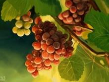 Виноградарства и ягодники Саратовской области получат федеральные деньги