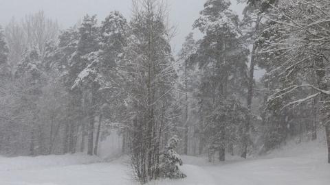 Саратовскую область два дня будет заметать снегом