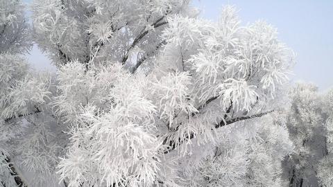 Снегопада и ветра в ближайшие сутки не будет