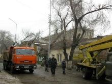 На Первомайской началась вырубка деревьев