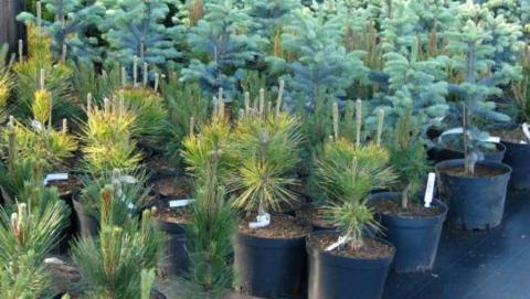 Компания «Ботаника» начинает акцию «Весна 2019».