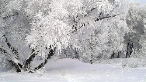 К ночи поднимется ветер и разгонит снегопад