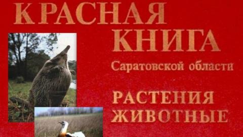 Прокурор заставил чиновников переиздать Красную книгу Саратовской области