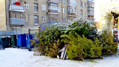 Жители Саратовской области выбросили более 1000 тонн новогодних деревьев
