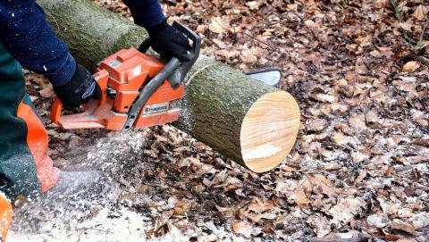 """""""Черный лесоруб"""" получил два года условно за 287 спиленных деревьев"""