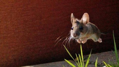 Дачникам советуют остерегаться мышей