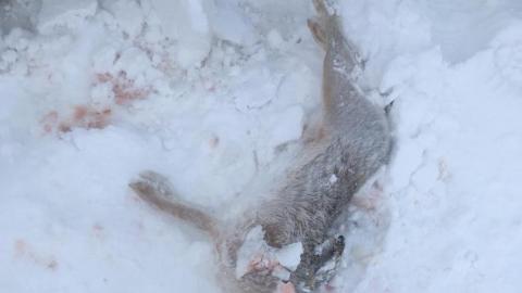 Два охотника с зайцами пытались убежать от росгвардейцев и полицейских