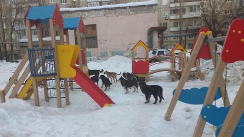 Стая агрессивных собак терроризирует жителей Комсомольского поселка