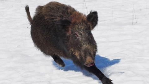 Пятерых браконьеров задержали за охоту на кабанчиков и косуль