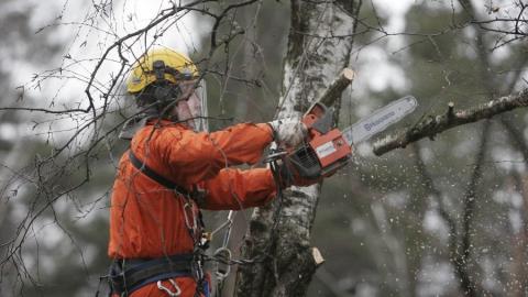 Обрезавший деревья мужчина погиб после удара веткой по голове