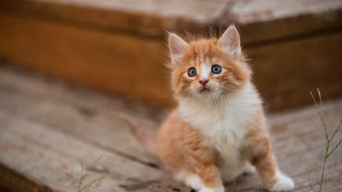 Садист на глазах детей жестоко убил котенка