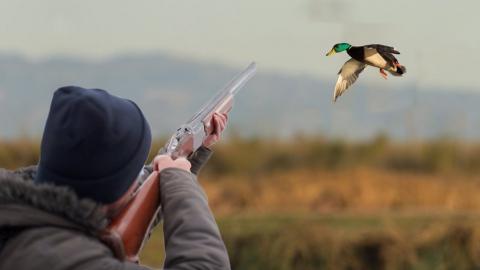 Открывается весенняя охота на пернатых