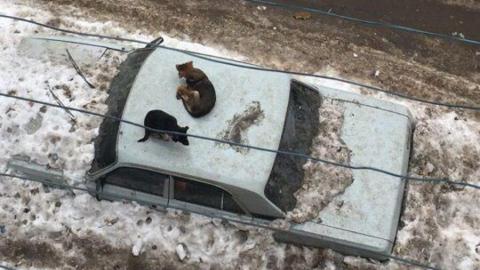 Собаки обжили заваленную снегом машину