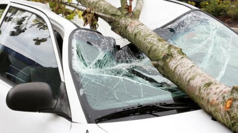 Чиновники заплатят за упавшее на автомобиль дерево