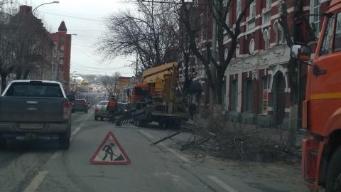 На двух улицах Саратова обрезают деревья
